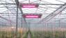 ENELTEC перейти к сельскому хозяйству светодиодного освещения рынка